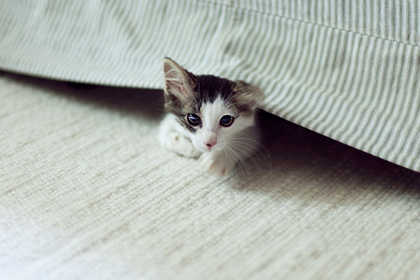 Kitten hiding under a bed.